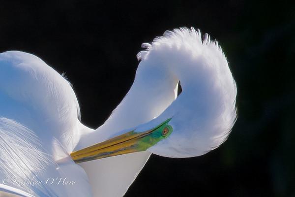 Birds of the Atlantic Flyway
