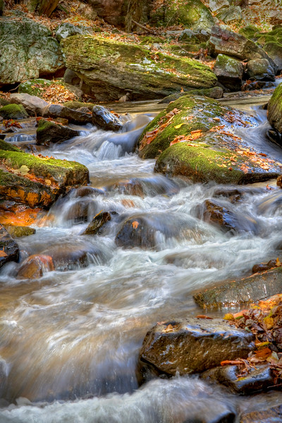 Beautiful creek flowing through the forest during autumn.