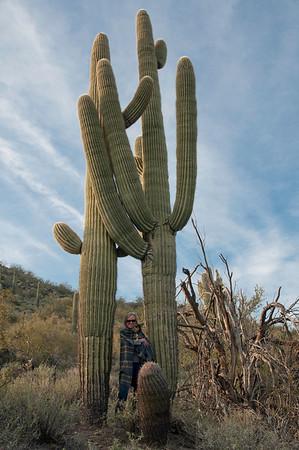 Desert, Cactus, Lakes & Mountains
