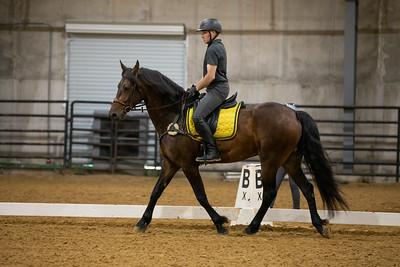 Horse 191