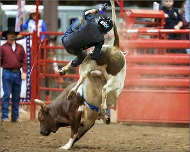 2020 Bull Feb 8