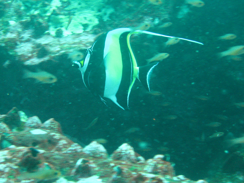 Diving in the Galapagos (249 of 392)