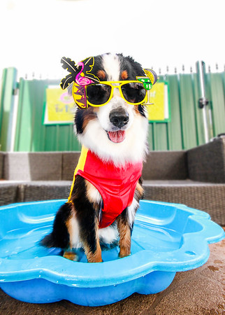 """FurBaby is """"cool"""" for summer!"""