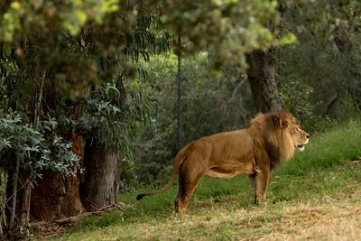 Oakland Zoo June