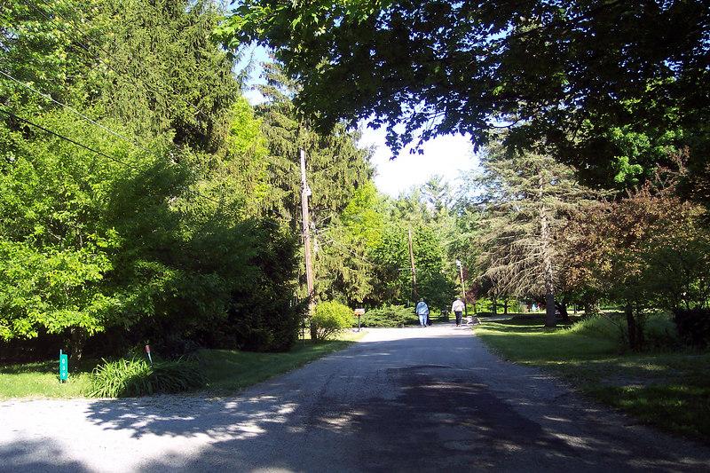 trees 042.jpg