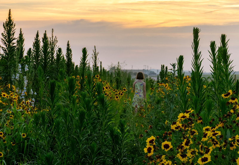 wildflower patch - zoe from a distance (p).jpg