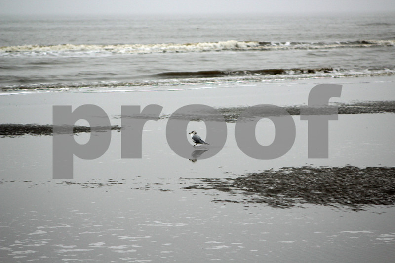 Lonely Seagul
