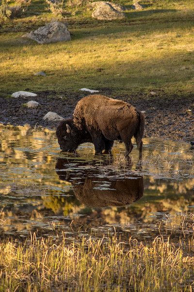 Teton & Yellowstone National Parks
