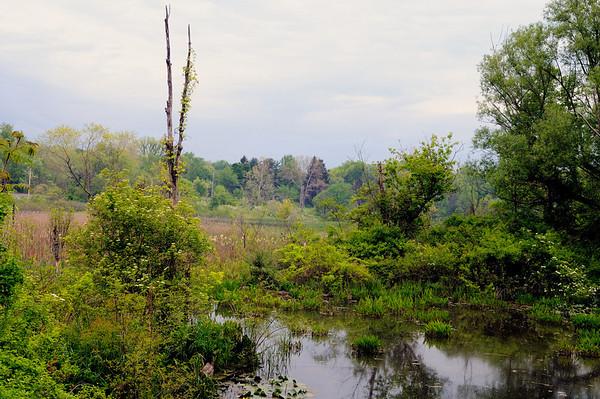 Beaver Marsh 5/26/08