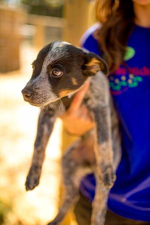 2015 Fall Puppy Development