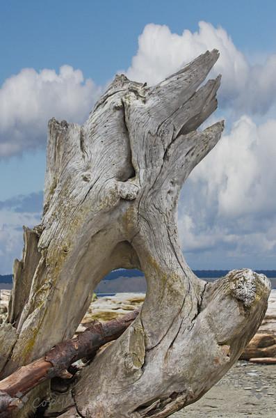 Dungeness Driftwood