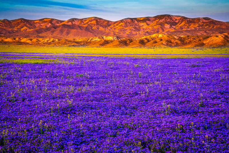 Carrizo Plain National Monument Wildflowers Superbloom Spring Symphony 37!  Elliot McGucken Fine Art Landscape Nature Photography Prints & Luxury Wall Art