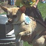 dogpin.jpg