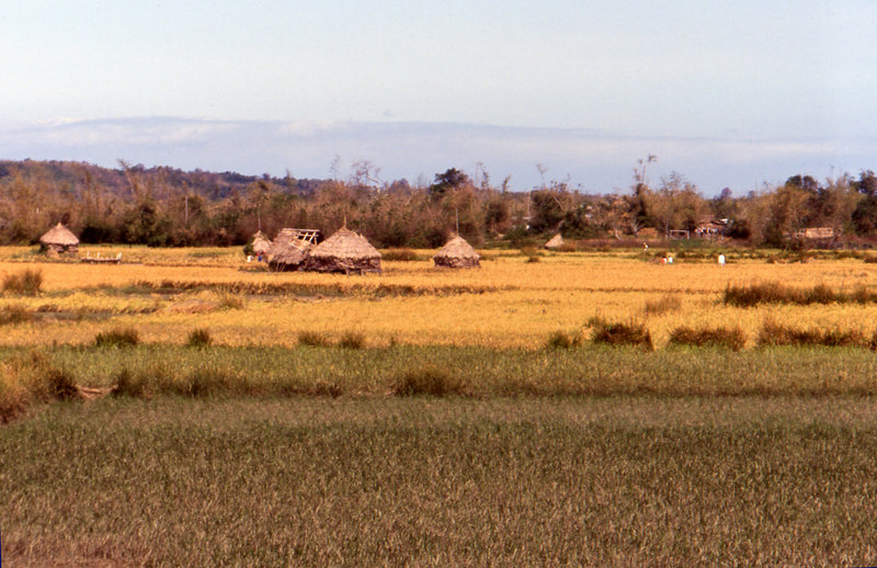 batac'91.rice field.jpg