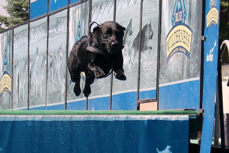 Dock Dogs at Fair-141.JPG