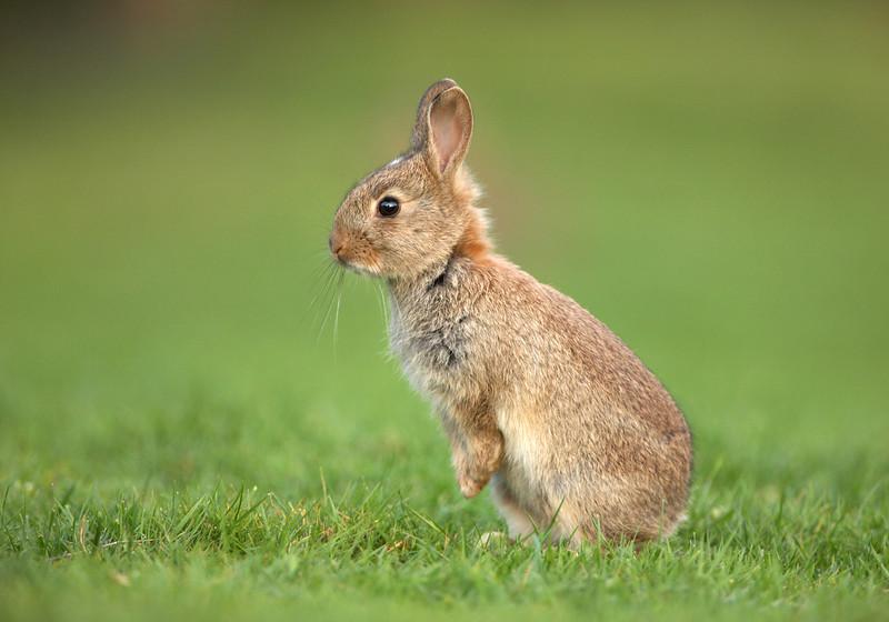 Rabbit - 8066.jpg