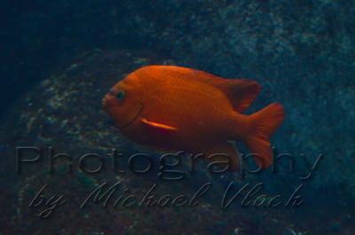 Monterey Bay Aquarium 2014