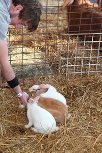 2012-Mid-South-Fair-Petting-Zoo