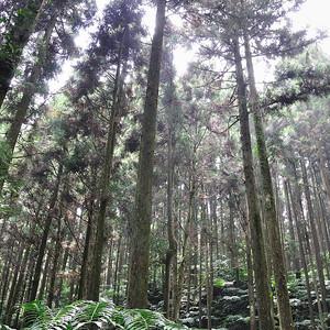 20110911_新竹山上人家