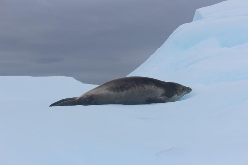 Antarctica 279.JPG