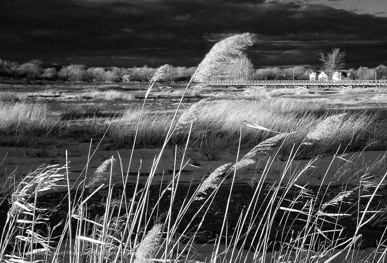 Infrared at Silver Sands State Park in Milford CT