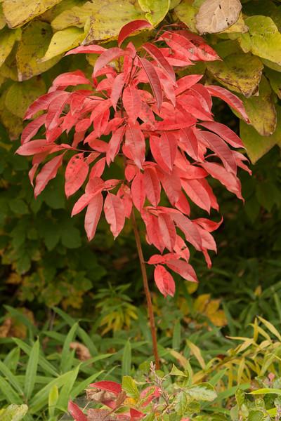 20111010-2011-10-1011-40-5211168.jpg