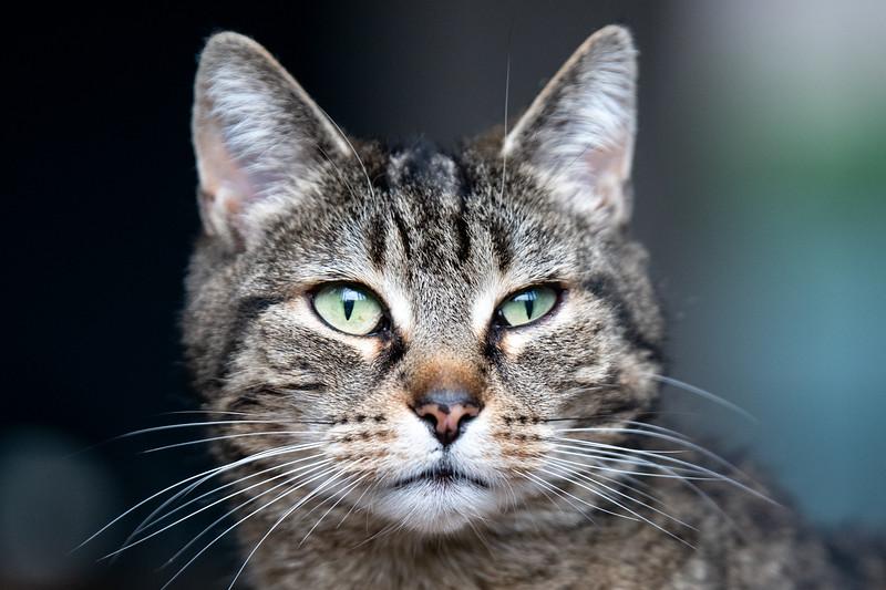 Portret Pippa-2132.jpg