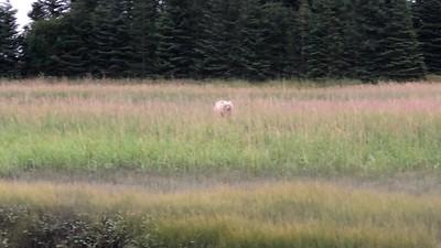 Bears of Lake Clark National Park