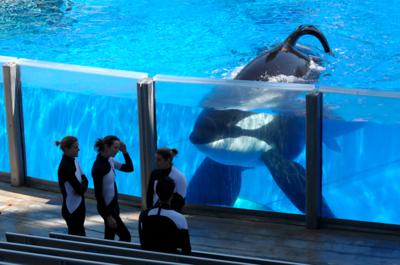 seaworld-tilikum-orca-that-killed-trainer-has-died