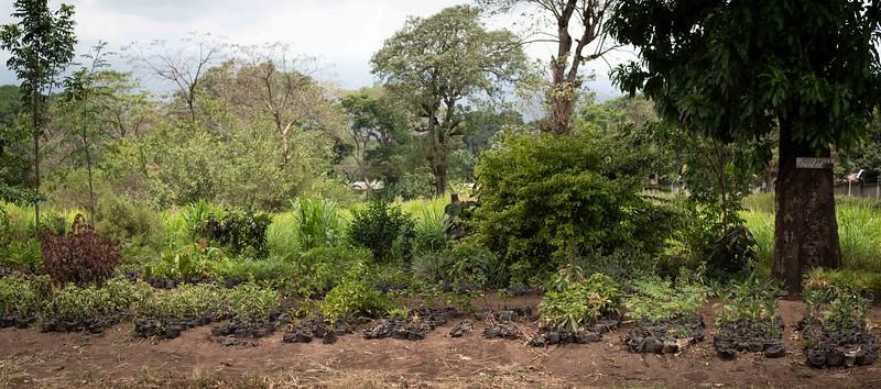 Roadside garden nursery