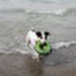 farley pups 088-2.jpg