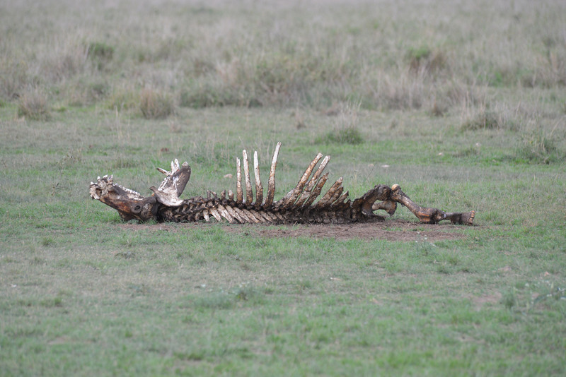 East Africa Safari 295.jpg