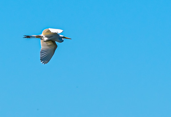 Viera Wetlands and Merritt Island NWR