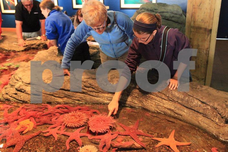 Seattle Aquarium 9117.jpg