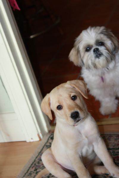 Gus & Zoe