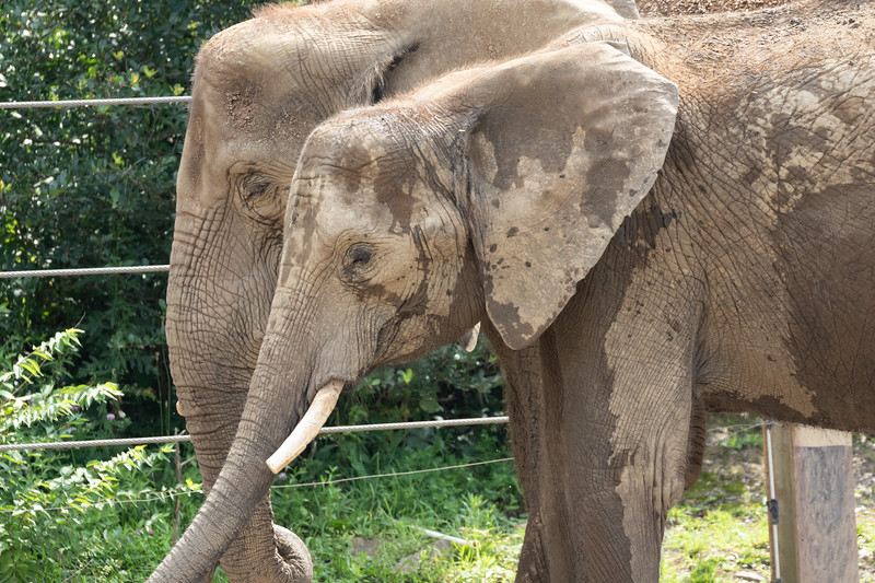 Pittsburgh Zoo-7218.jpg