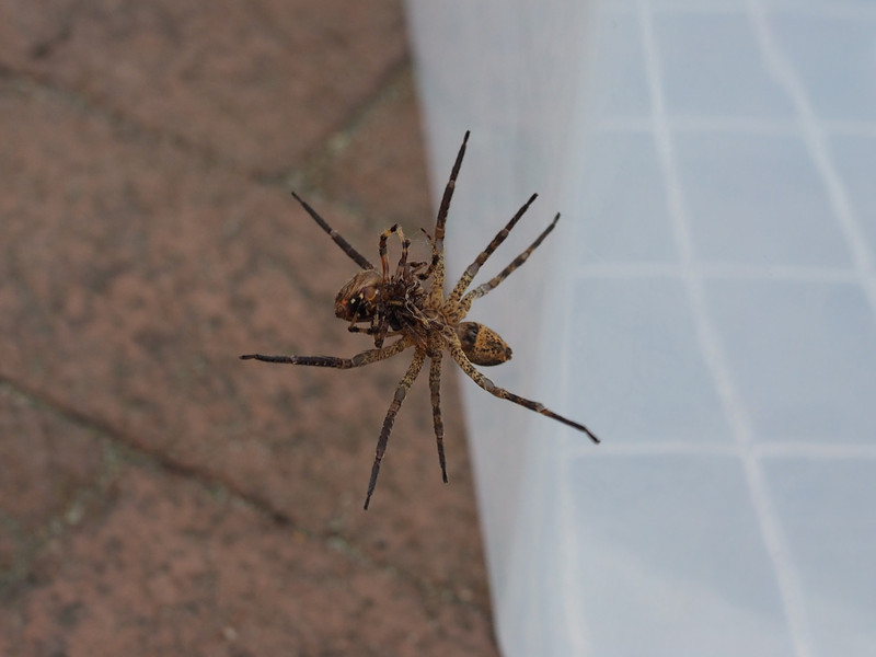 20131012_Spider_61.jpg