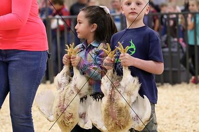 Llano County Junior Livestock Show 2016
