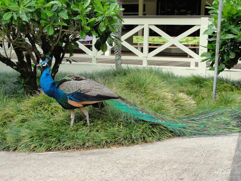 Oahu Hawaii 2011 - 123.jpg