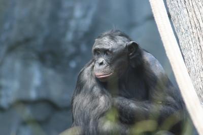 Primates  (3 species)