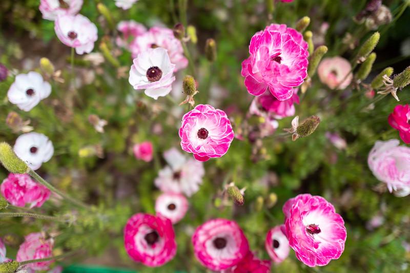 Spring Flowers A-221.jpg