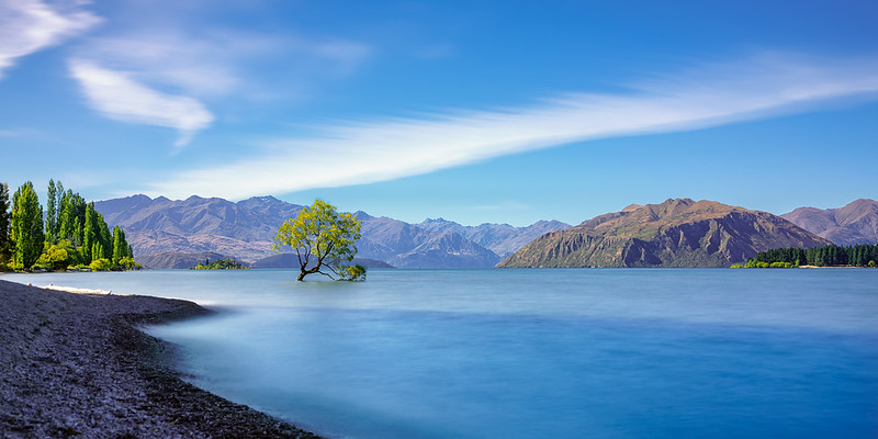 Lake Wanaka Tree Summer Sun