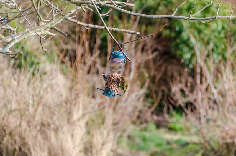 Birds 180118-60.jpg