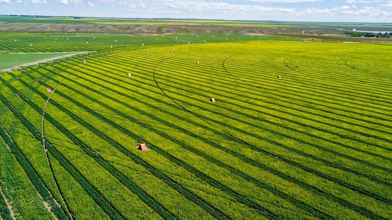 farm land  (1 of 1).jpg