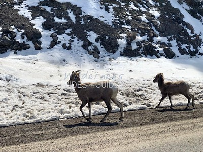 March 18 Colorado Sightseeing