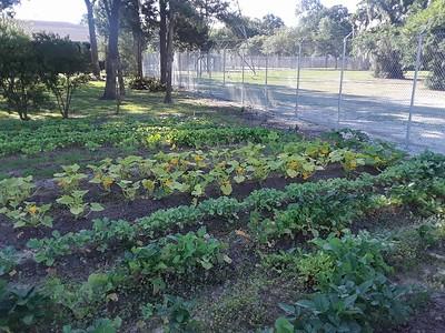 Community Garden 2018