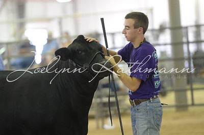 Ringshots - Pair and Bull Show