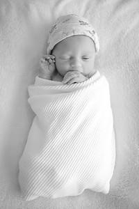 rowan newborn portraits