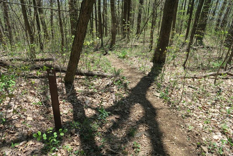 Pinnacle Mountain Trail - 2,980'