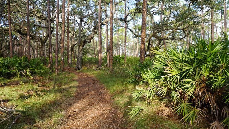 Path into oak hammock